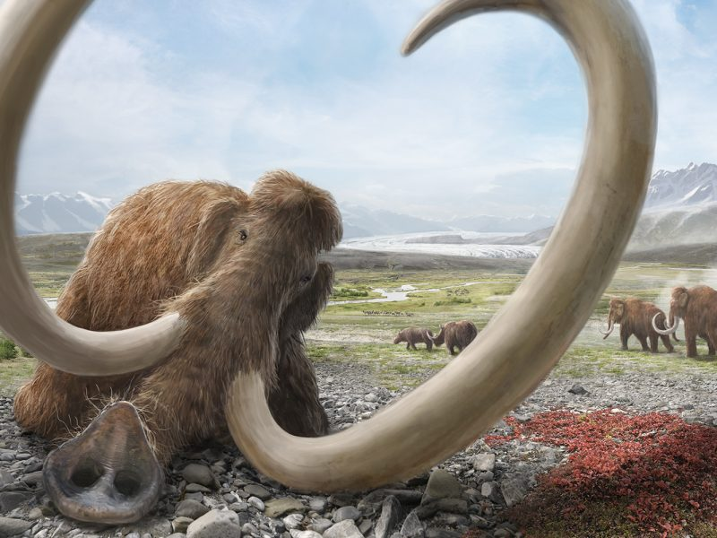 Mammut Lebensbild Eiszeit