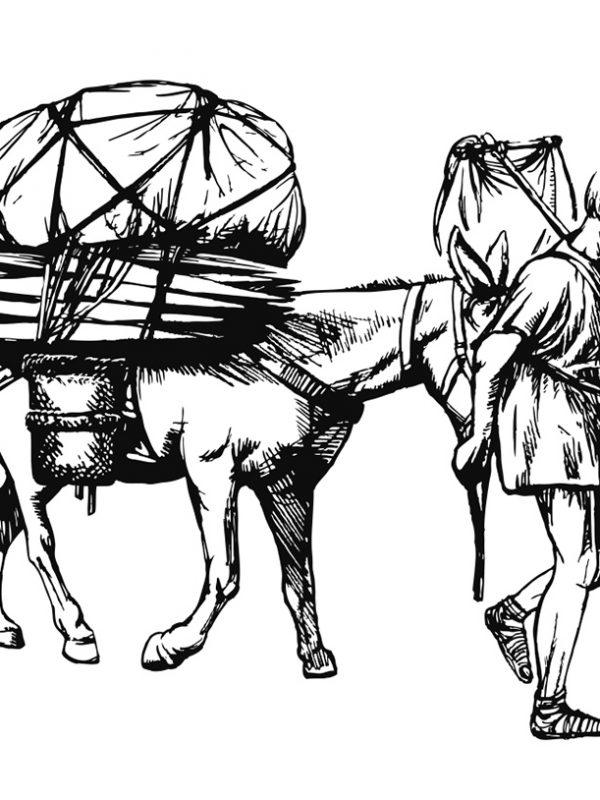 Zeichnung Transport Maultier